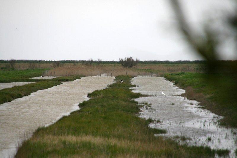 Quelques canards et tadornes dans les marais