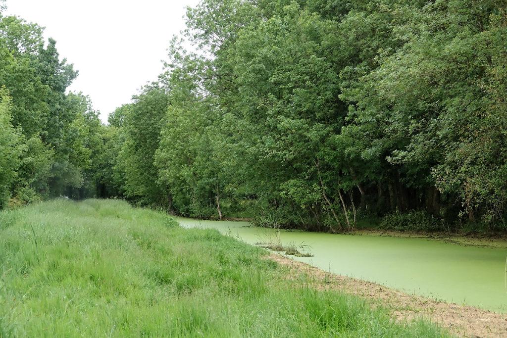 Canal de la Course