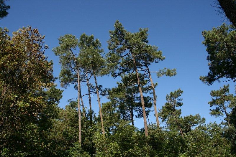 pins et chênes verts mais pas que...