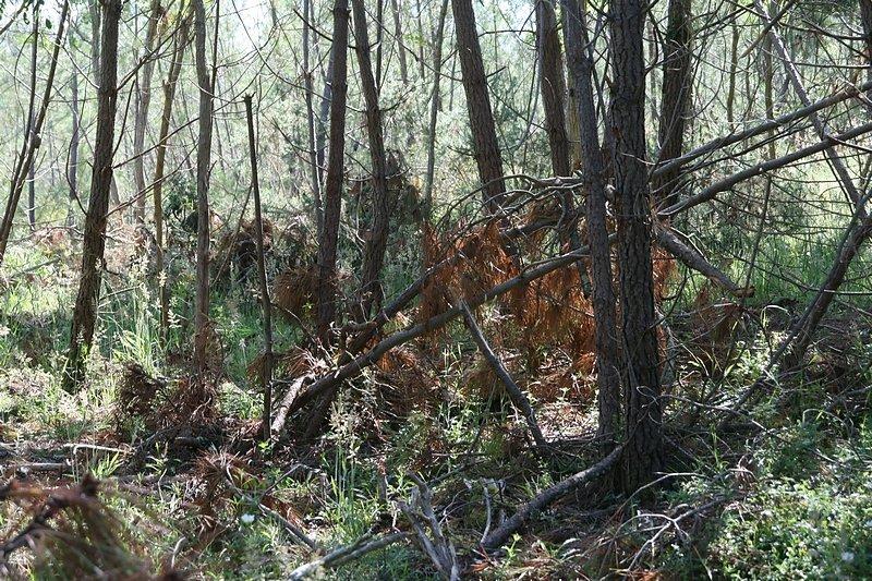les bois coupés restentau sol pour se transformer en humus en quelques années