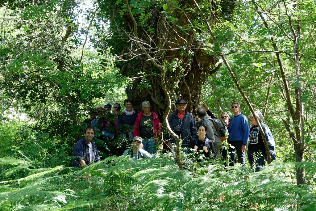 Le groupe fait cercle autour du tronc