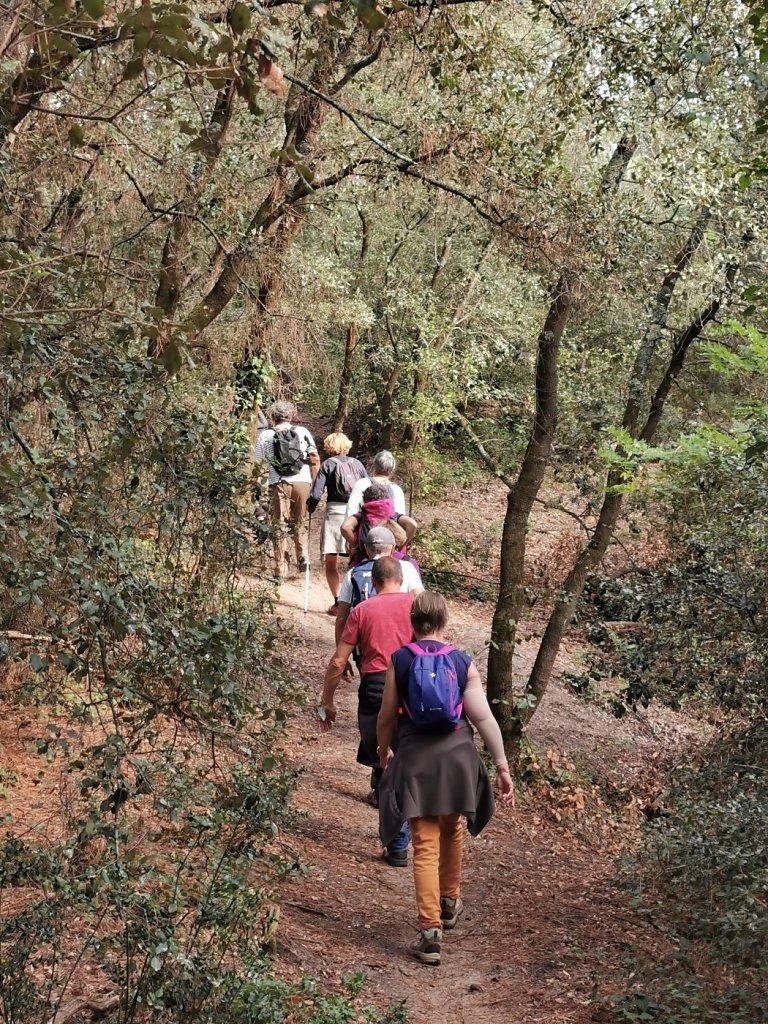 Grande marche en forêt de la Coubre