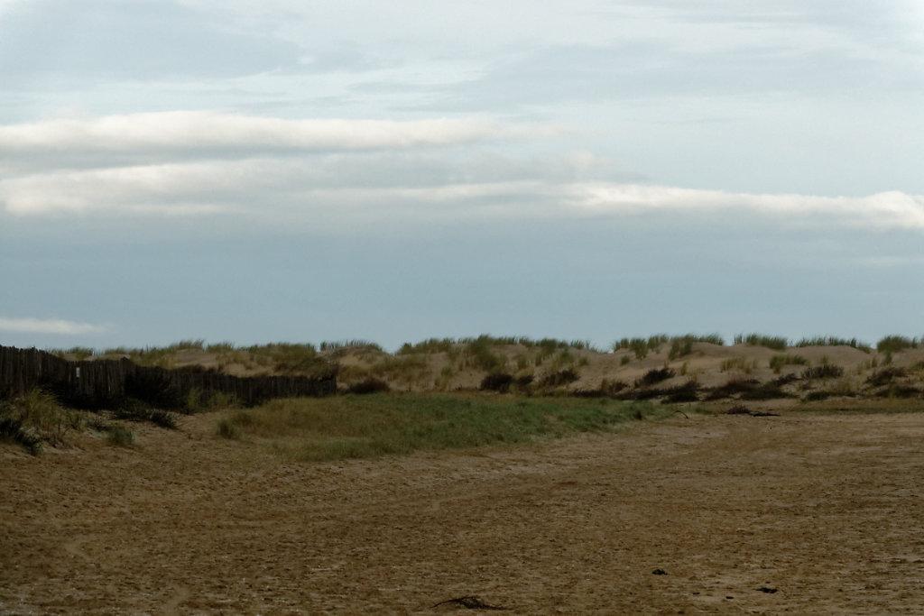 Banquette herbeuse, le haut de plage se végétalise et se transforme en dune embryonnaire