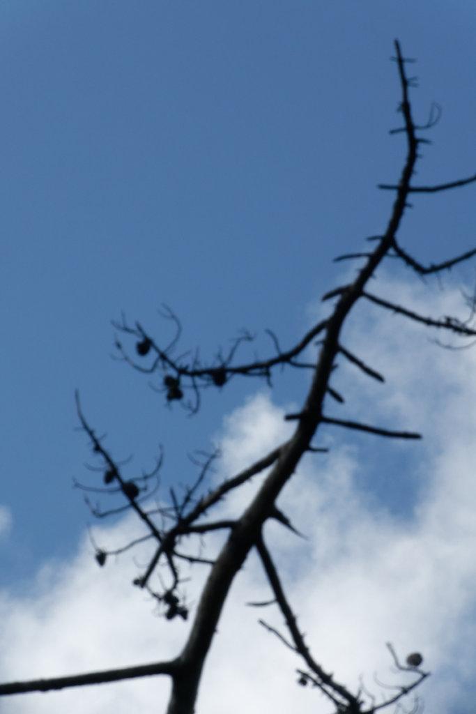 arbre mort, habitat pour de nombreuses espèces
